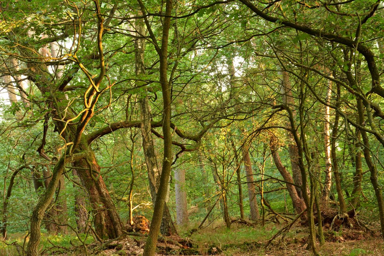 Het bosreservaat de Duddel in kroondomein Het Loo. De bomen daar hebben veel CO2 opgenomen.