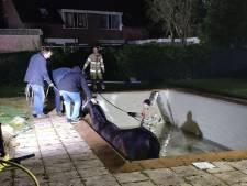 Brandweer redt paard uit Doorns zwembad met trap van hooibalen