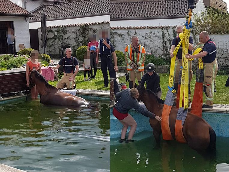De brandweer liet een kraan aanrukken om het paard uit het zwembad te kunnen hijsen.