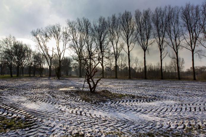 Veel bomen in het Ton Smitspark zijn de afgelopen weken gekapt. In het voorjaar wordt nieuw groen geplant.