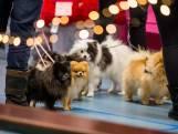 Outfit voor je hond scoren op de Hondenkerstmarkt