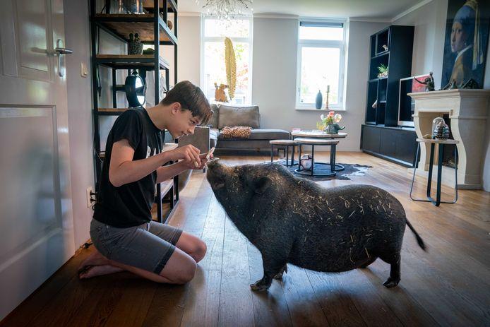 Bjarn uit Opheusden vertelde over hangbuikzwijn Spekkie.