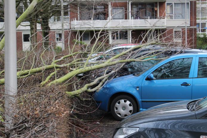 Hengelo - Op donderdag 18 januari heeft de storm een ravage aan omvallende bomen aangericht.