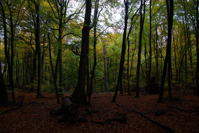 Het drama vond zaterdagmiddag plaats in het Forêt de Retz, een bosgebied vlakbij Compiègne.
