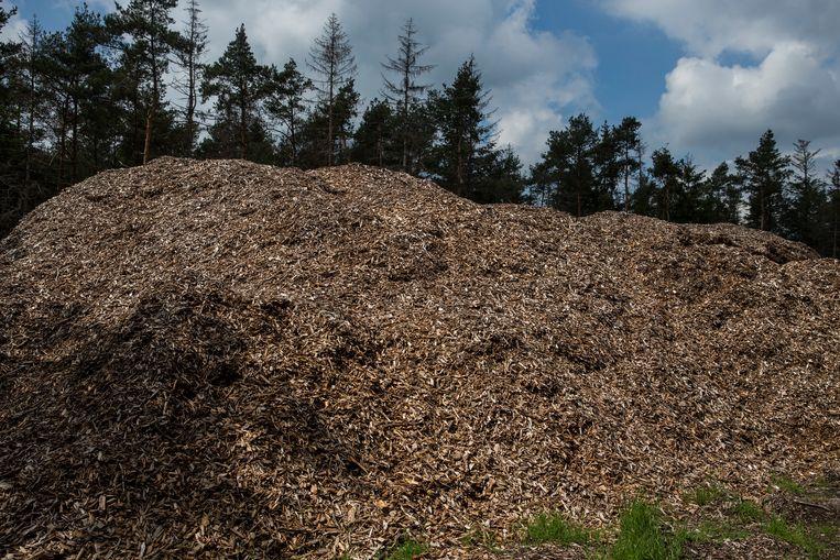 Resten van gekapt hout liggen opgeslagen in het natuurgebied De Sallandseheuvelrug. Het hout kan gebruikt worden in de papierindustrie of als biomassa in een energiecentrale. Beeld Hollandse Hoogte