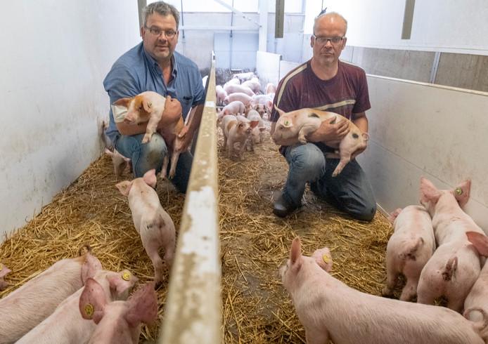 """Willem en Rien Stoutjesdijk: ,,Omdat wij onze varkens op een diervriendelijker manier huisvesten dan de gangbare varkenshouderij willen we dat ook laten zien aan de consument."""""""