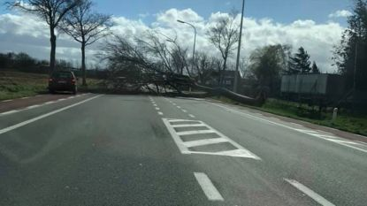 Storm trekt over onze regio: al minstens 40 oproepen, Grote Prijs Jean Pierre Monseré gaat niet door