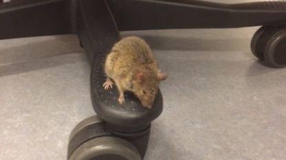 Muizen hebben weg gevonden naar gerechtsgebouw Brussel