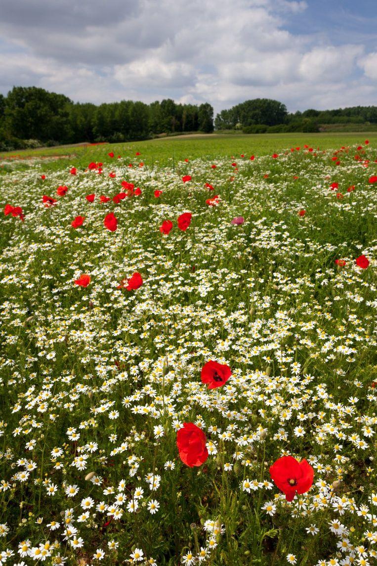 Illustratiefoto - De Dag van de Boerennatuur vindt voor de eerste keer plaats in Horebeke.