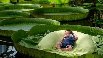 Baby's gaan weer op de foto op reuzenbladeren in Plantentuin Meise