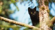 Kat zit vijf dagen in boom: brandweer brengt redding