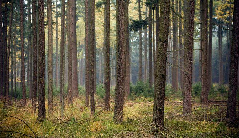 Het OCMW van Lier gaat 50 hectare bos verkopen aan het Vlaamse Agentschap Natuur en Bos.