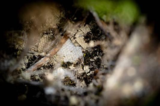 Wespennesten kregen door het warme en droge weer kans zich snel te ontwikkelen.
