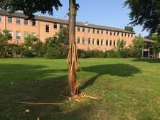 Bomen in Zutphen zwaar toegetakeld: 'Wij zijn benieuwd hoe dit kon gebeuren'