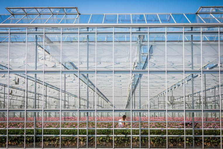 De grootste 'fossiele' subsidie is volgens de OESO die voor de glastuinbouw.  Beeld Hollandse Hoogte / Laurens van Putten