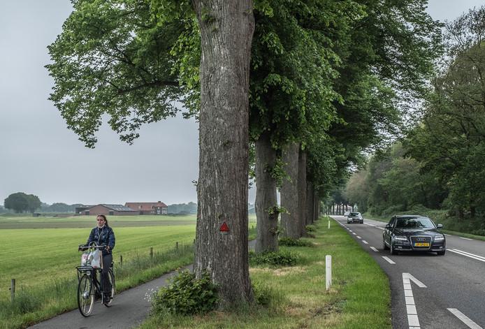 Langs de N271 tussen Mook en Milsbeek worden bomen gekapt voor de herinrichting van de weg.