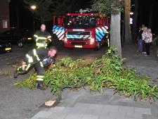 Tak valt uit boom in Waalwijk en mist voetganger op een haar