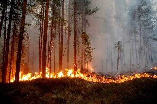 Een bosbrand in Karbole in Zweden.