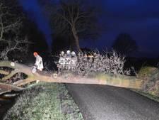 Omgevallen boom blokkeert weg in Daarle