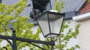 Koppel duiven woont in exclusief en verlicht nest op de Markt