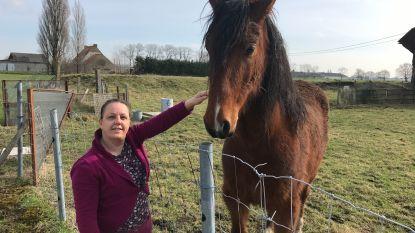 Eigenaar van gedumpt paard gevonden en meteen opgepakt door politie