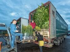 Naderende Brexit zorgt voor boost bij boomkwekers: 'Veel bestellingen worden naar voren gehaald'