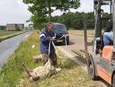 FvD in Brabant wil wolf beschermde status afpakken