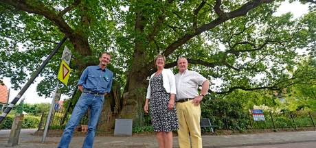 Kroezeboom in Ruurlo kan nog eeuwen mee