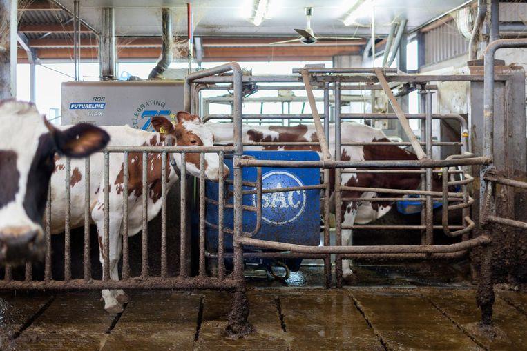 De stallen van 'kleine' boer Appie Haarman in Bathmen Beeld Hanne van der Woude