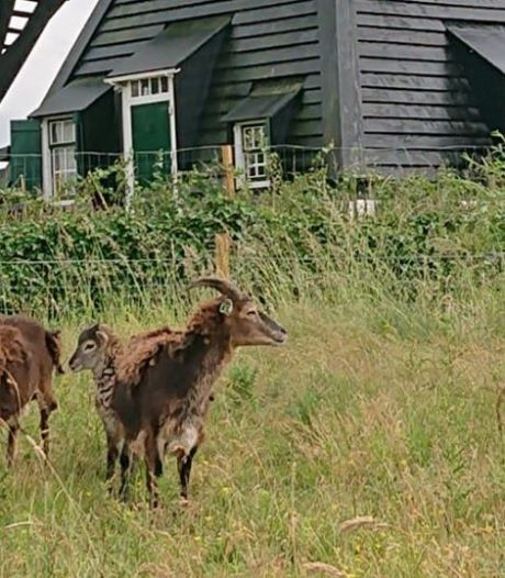 Kinderboerderij in wording in Leerdam reserveert vast plek voor uitbreiding