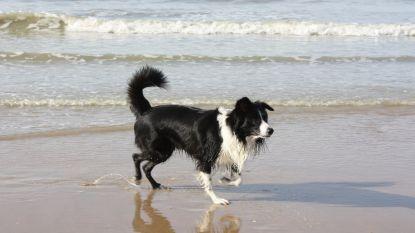Honden krijgen meer bewegingsruimte op het strand. Baasjes kunnen nu via effen pad met hun hond richting zee