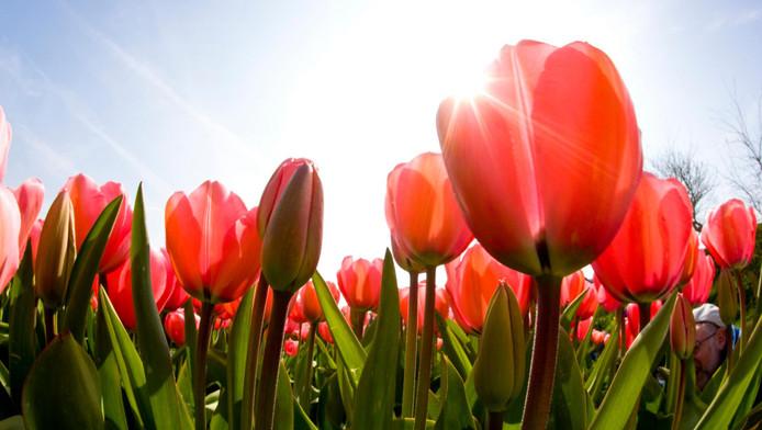 L'ellébore est une fleur à surveiller car elle symbolise le scandale.