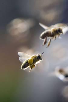 Bijzzzzzonder: zeven nieuwe diersoorten in de regio Amersfoort