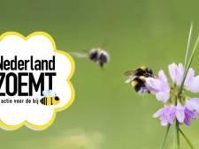 Boxmeer is goed voor de bijen