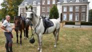 Veearts volgt paarden op de voet tijdens CEI** Belgisch Kampioenschap