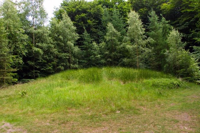 Een grafheuvel in het Speulderbos bij Ermelo.