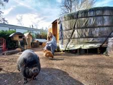Martin (41) moet zijn varken en camping verlaten en trekt weer alleen de wijde wereld in