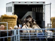 Konikpaarden goed aangekomen in Wit-Rusland