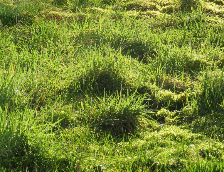 Het grasveld van Koos Dijksterhuis. Beeld Koos Dijksterhuis