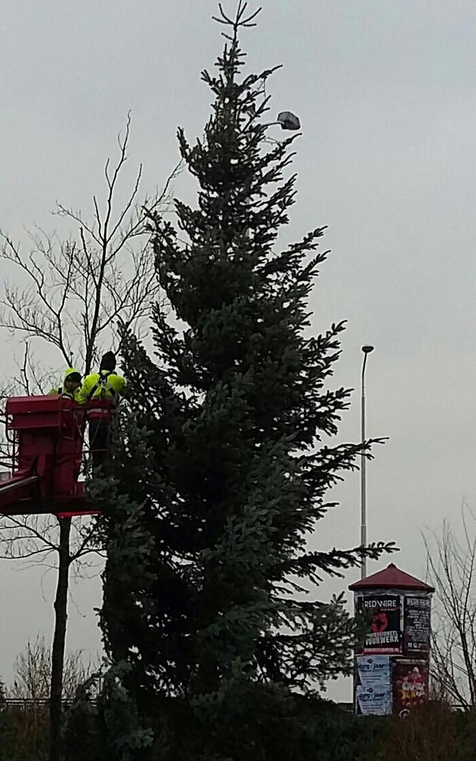 Kerstboom op hoek Willemsweg-Graafseweg in Nijmegen staat er. Nu de lampjes nog.