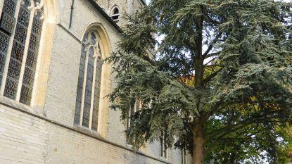 Erfgoedsprokkel toont geschiedenis Sint-Martinuskerk Zomergem