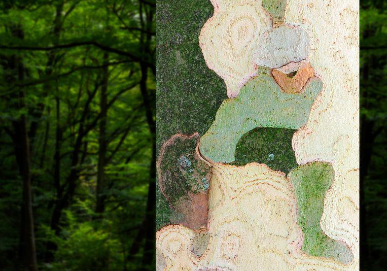 Beeld uit de tentoonstelling 'Bomen in Beeldspraak' van Mark Kohn. Beeld Mark Kohn