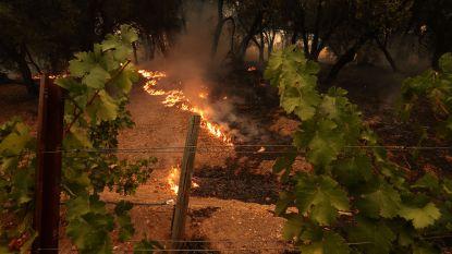 Bosbranden leggen beroemd wijngebied Napa Valley in de as