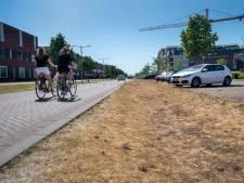 Arnhem torst de last van de schoonheid en vooral de heide heeft het moeilijk