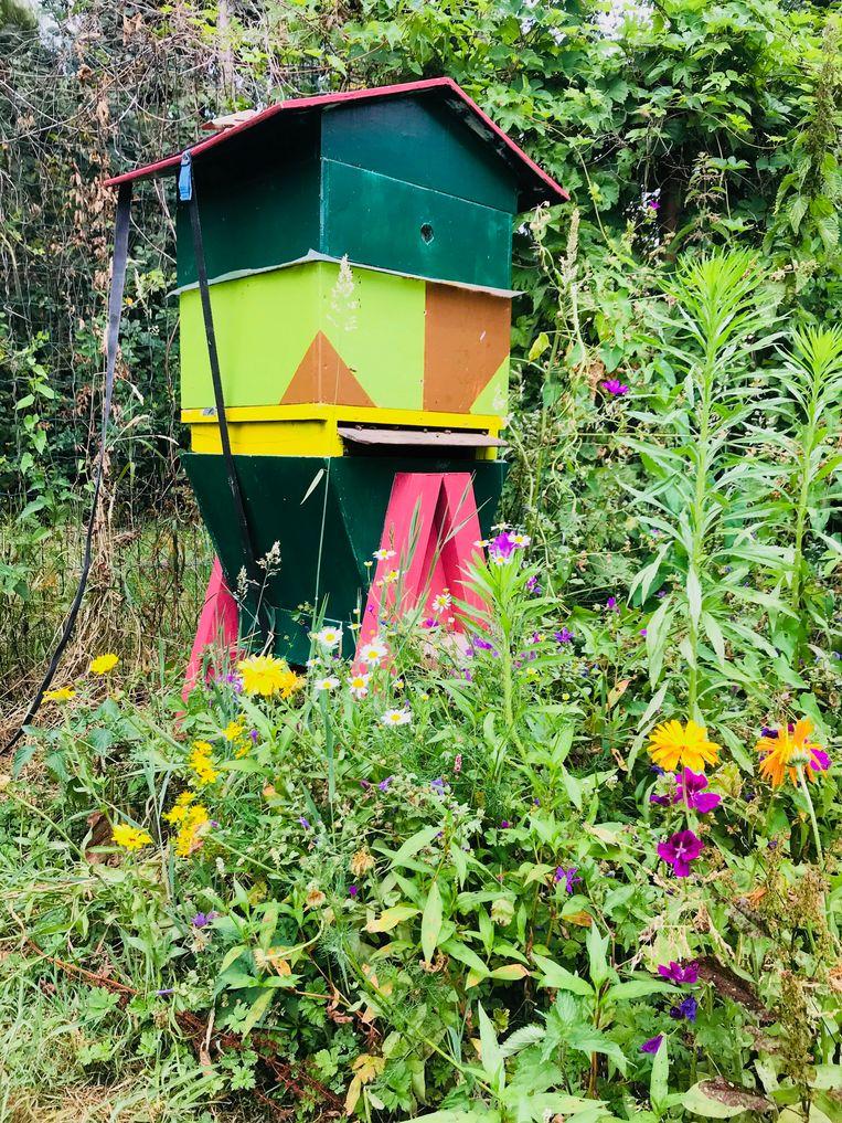 Ronny Verlé bij zijn bijenkasten met zwarte bijen.