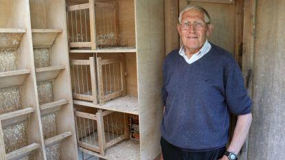 Henri (80) al tweede keer in jaar tijd bestolen: dieven gaan aan de haal met 16 duiven