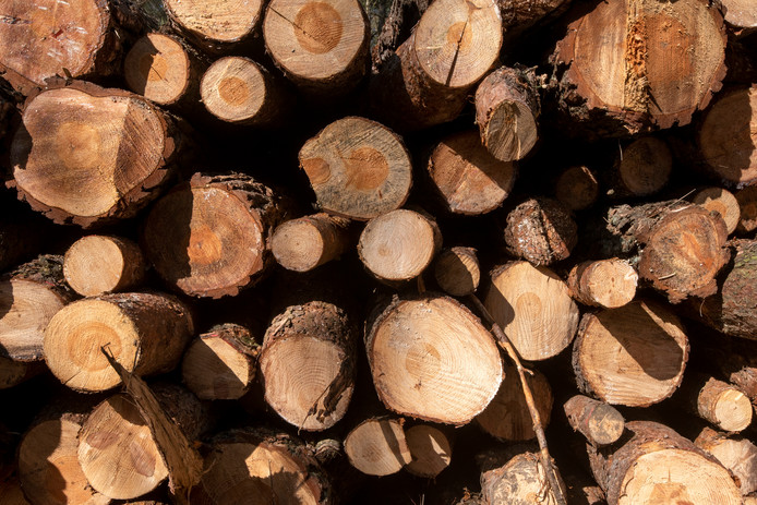 Geen houtstapels aan de Kemnaweg. De eiken mogen niet gekapt worden.