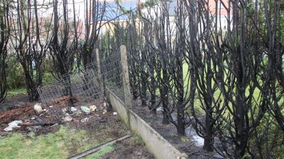 Haag afgebrand nadat bewoner vuurtje stookt