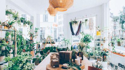 4 x planten shoppen in provincie Antwerpen