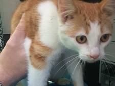Katje gevonden in Rijssen na rit onder motorkap